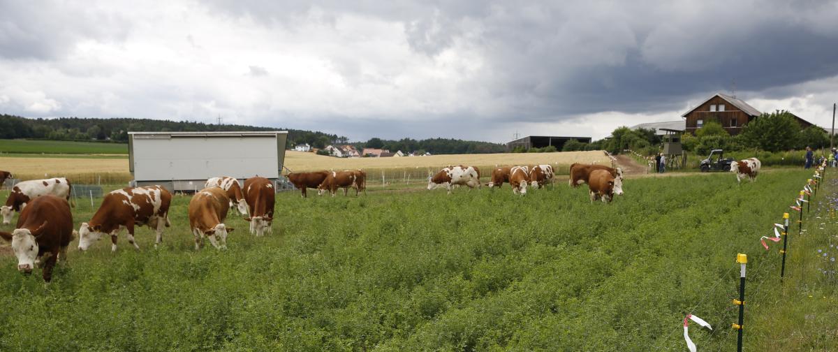 Milch kaufen Bio Weide Oberasbach Fürth Nürnberg Zirndorf
